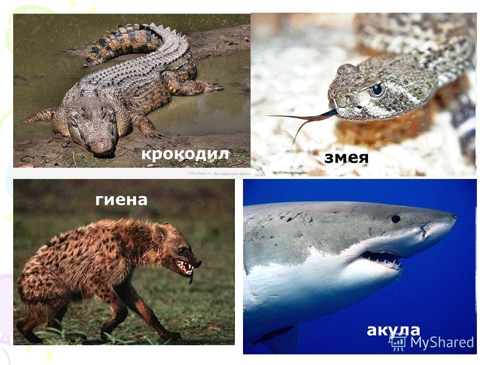 гиена змея акула крокодил