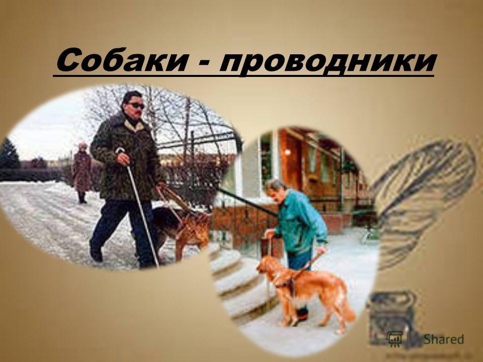 Собаки - проводники