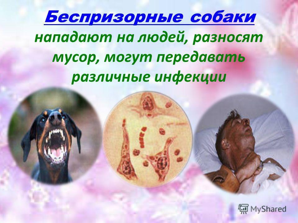 Беспризорные собаки нападают на людей, разносят мусор, могут передавать различные инфекции