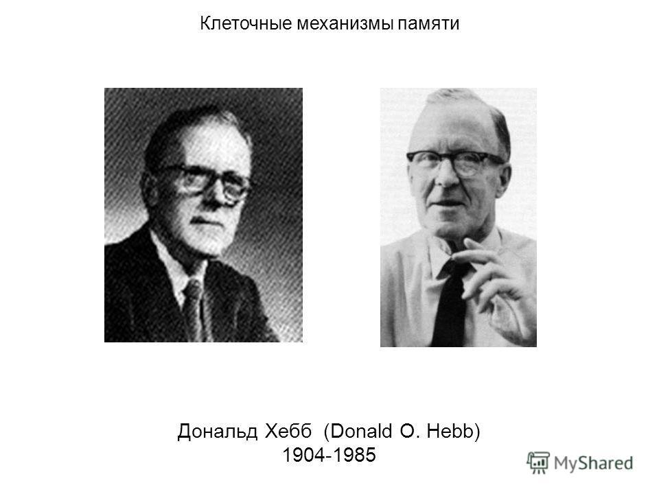 Дональд Хебб (Donald O. Hebb) 1904-1985 Клеточные механизмы памяти