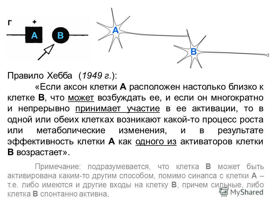 A B B A Правило Хебба (1949 г.): «Если аксон клетки А расположен настолько близко к клетке В, что может возбуждать ее, и если он многократно и непрерывно принимает участие в ее активации, то в одной или обеих клетках возникают какой-то процесс роста