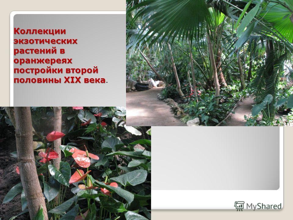 Коллекции экзотических растений в оранжереях постройки второй половины XIX века Коллекции экзотических растений в оранжереях постройки второй половины XIX века.