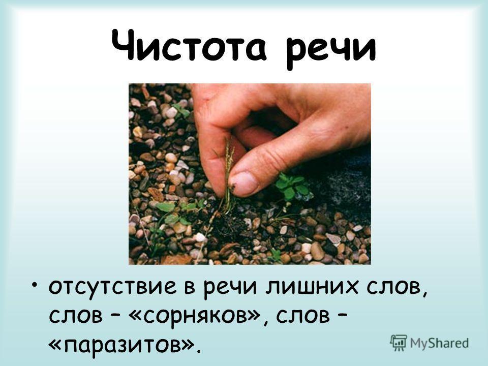 Чистота речи отсутствие в речи лишних слов, слов – «сорняков», слов – «паразитов».