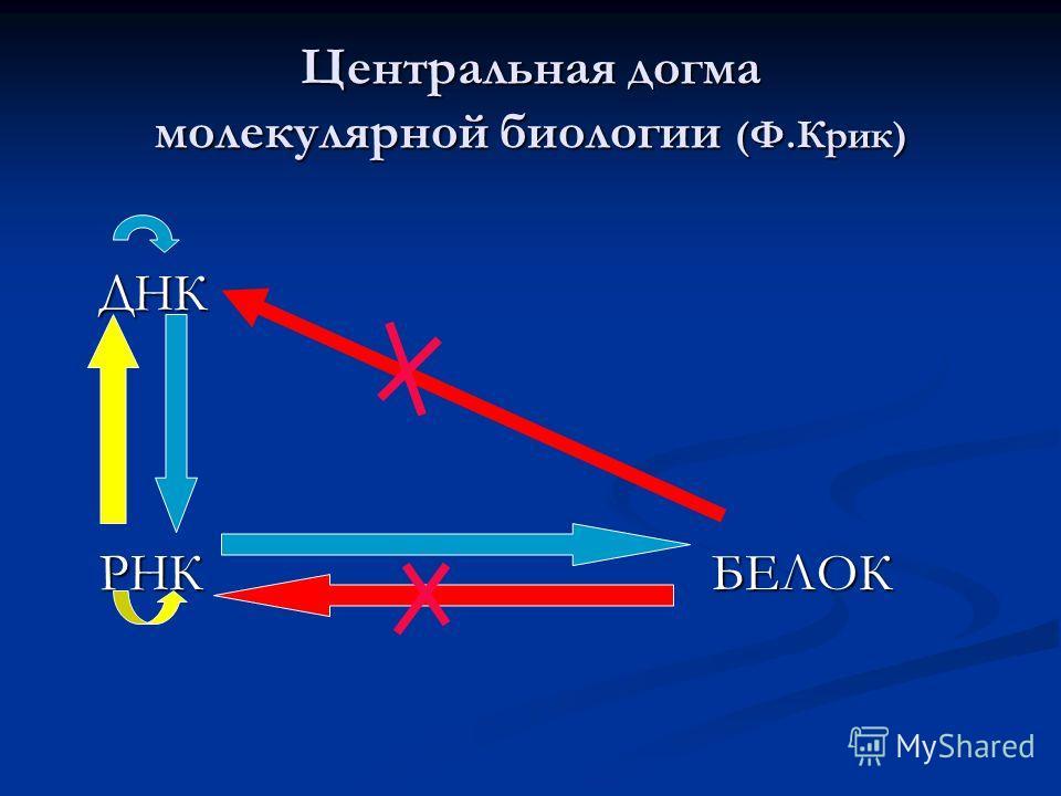 Центральная догма молекулярной биологии (Ф.Крик) ДНК ДНК РНК БЕЛОК РНК БЕЛОК