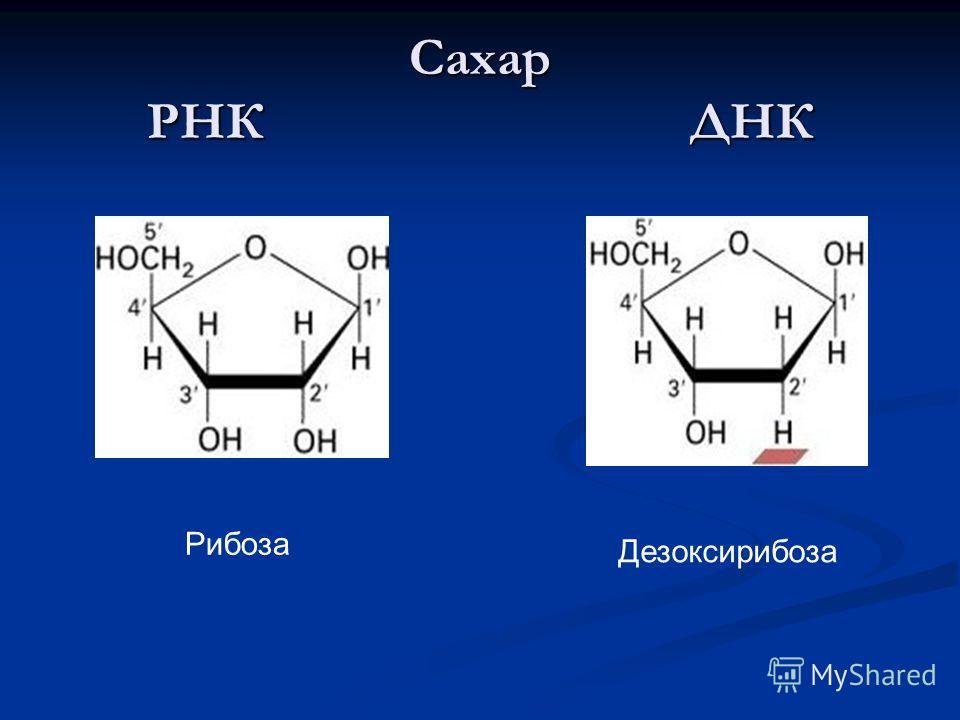 Сахар РНК ДНК Рибоза Дезоксирибоза