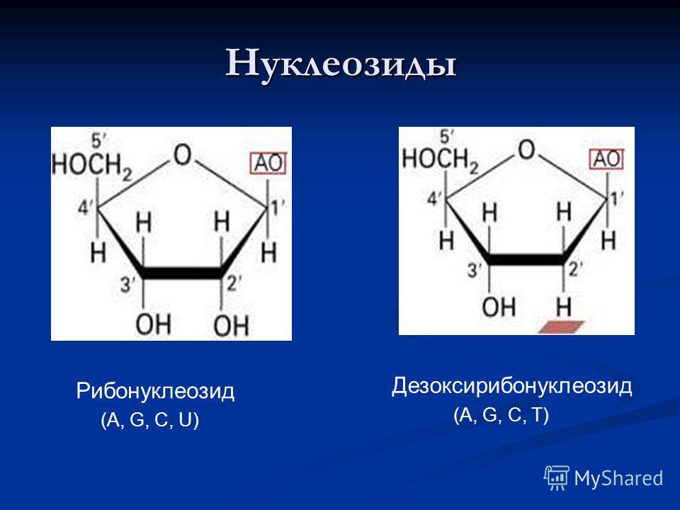 Нуклеозиды Рибонуклеозид Дезоксирибонуклеозид (A, G, C, U) (A, G, C, T)
