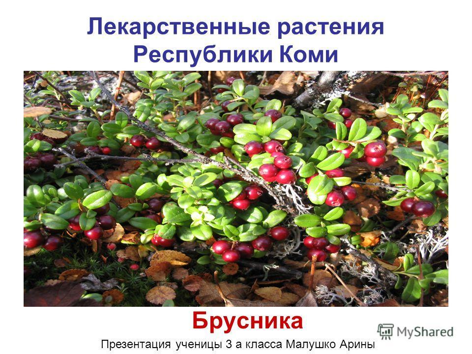 Лекарственные растения Республики Коми Брусника Презентация ученицы 3 а класса Малушко Арины