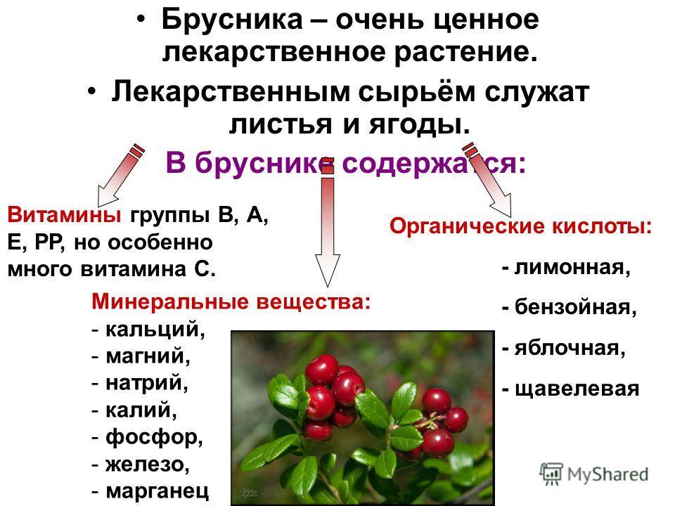 Брусника – очень ценное лекарственное растение. Лекарственным сырьём служат листья и ягоды. В бруснике содержатся: Витамины группы В, А, Е, РР, но особенно много витамина С. Органические кислоты: - лимонная, - бензойная, - яблочная, - щавелевая Минер