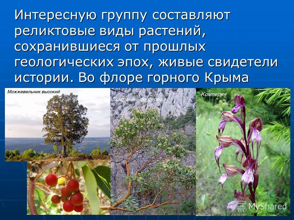 Интересную группу составляют реликтовые виды растений, сохранившиеся от прошлых геологических эпох, живые свидетели истории. Во флоре горного Крыма немало третичных реликтов, например: