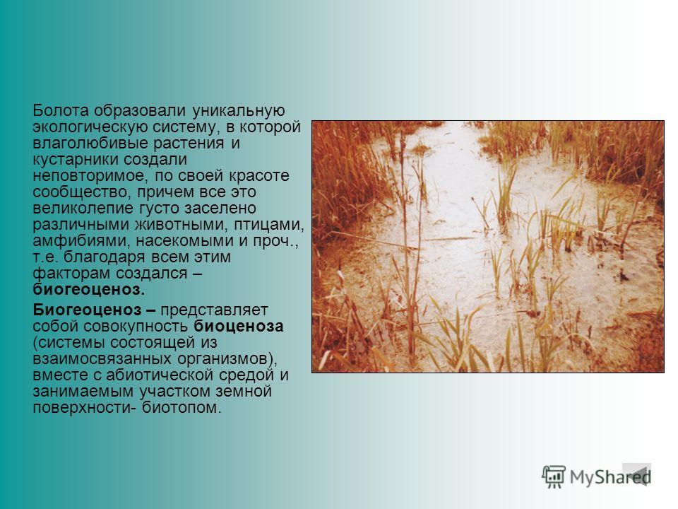 ВВЕДЕНИЕ Западно-Сибирская низменность характеризуется разнообразием форм рельефа, общий морфологический облик низменности создан преимущественно речной эрозией, действие которой началось с момента отступания и исчезновения третичного моря и продолжа