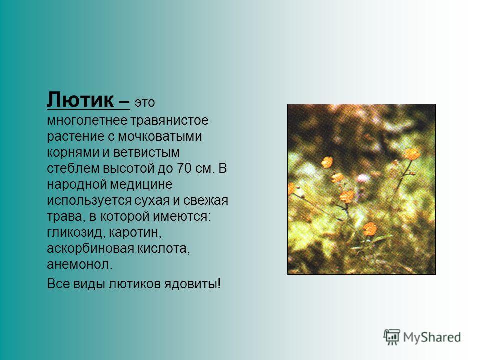 Аир обыкновенный – его часто называют «татарским зельем», потому что пришел он к нам в ХIII веке вместе с татаро-монгольским игом. Завоеватели считали, что аир растущий у берегов, очищает воду, делает её безопасной для здоровья людей и животных.