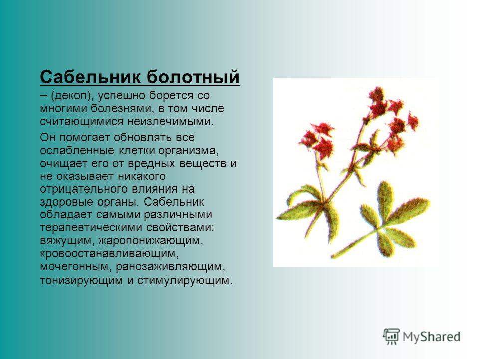 Лютик – это многолетнее травянистое растение с мочковатыми корнями и ветвистым стеблем высотой до 70 см. В народной медицине используется сухая и свежая трава, в которой имеются: гликозид, каротин, аскорбиновая кислота, анемонол. Все виды лютиков ядо