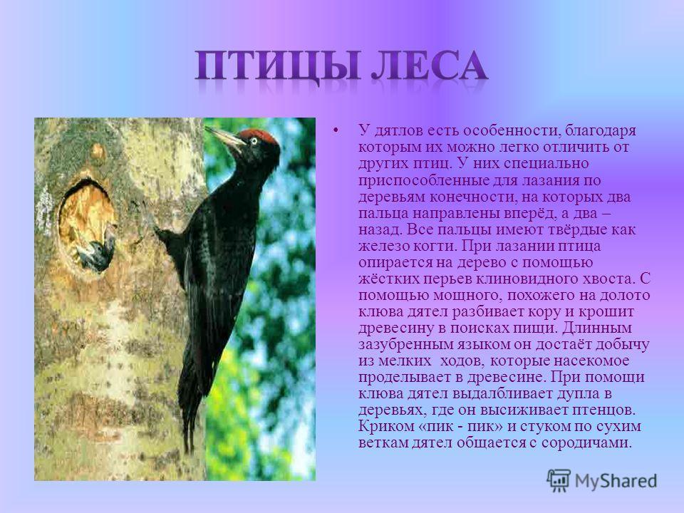 У дятлов есть особенности, благодаря которым их можно легко отличить от других птиц. У них специально приспособленные для лазания по деревьям конечности, на которых два пальца направлены вперёд, а два – назад. Все пальцы имеют твёрдые как железо когт