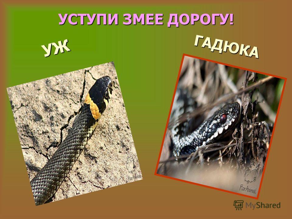 ДУРМАН Белладон- на