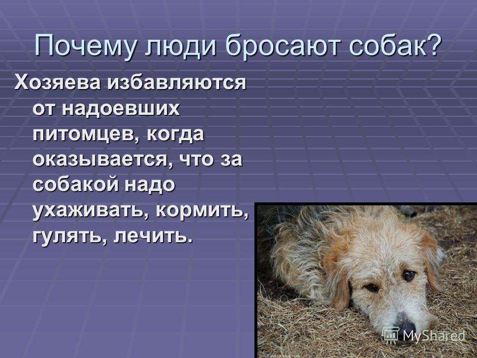 Почему люди бросают собак? Хозяева избавляются от надоевших питомцев, когда оказывается, что за собакой надо ухаживать, кормить, гулять, лечить.