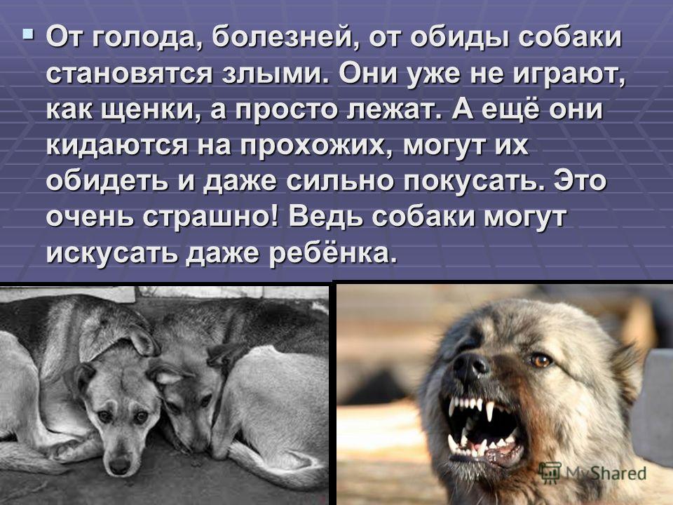 От голода, болезней, от обиды собаки становятся злыми. Они уже не играют, как щенки, а просто лежат. А ещё они кидаются на прохожих, могут их обидеть и даже сильно покусать. Это очень страшно! Ведь собаки могут искусать даже ребёнка. От голода, болез