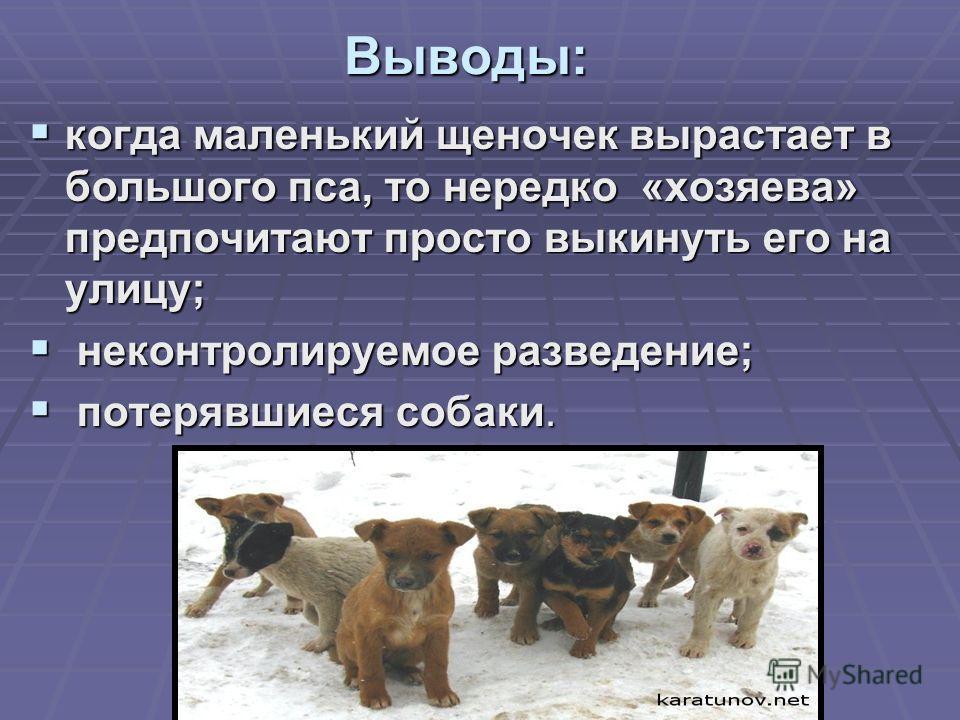 Выводы: когда маленький щеночек вырастает в большого пса, то нередко «хозяева» предпочитают просто выкинуть его на улицу; когда маленький щеночек вырастает в большого пса, то нередко «хозяева» предпочитают просто выкинуть его на улицу; неконтролируем