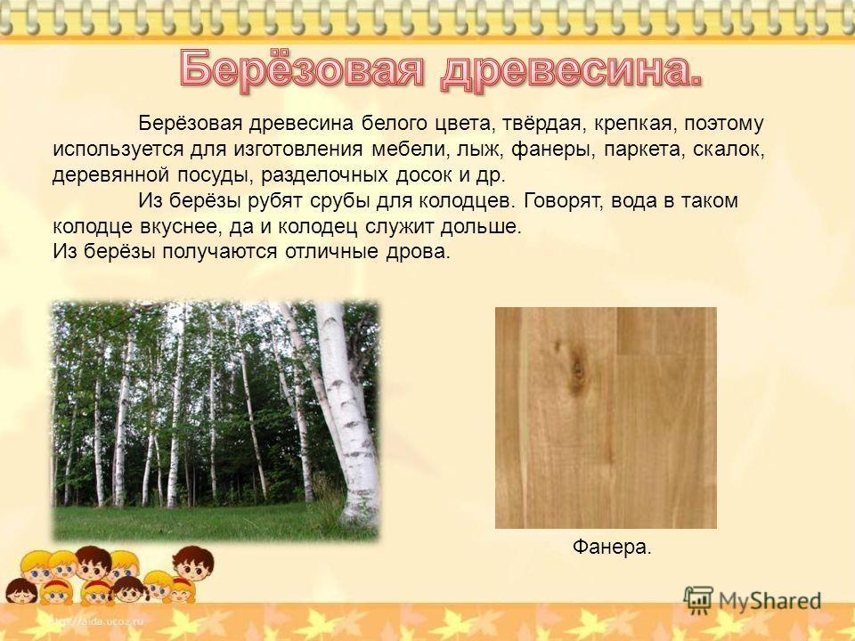 Берёзовая древесина белого цвета, твёрдая, крепкая, поэтому используется для изготовления мебели, лыж, фанеры, паркета, скалок, деревянной посуды, разделочных досок и др. Из берёзы рубят срубы для колодцев. Говорят, вода в таком колодце вкуснее, да и