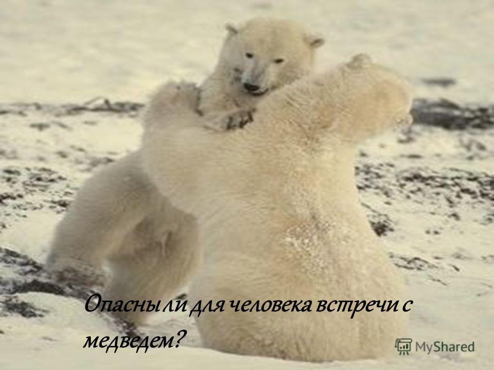Опасны ли для человека встречи с медведем?
