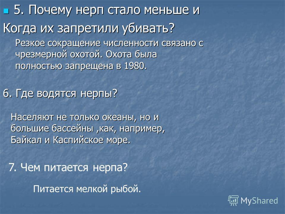 5. Почему нерп стало меньше и 5. Почему нерп стало меньше и Когда их запретили убивать? Населяют не только океаны, но и большие бассейны,как, например, Байкал и Каспийское море. Резкое сокращение численности связано с чрезмерной охотой. Охота была по