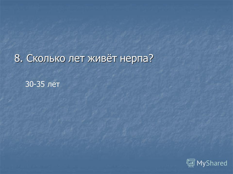 8. Сколько лет живёт нерпа? 30-35 лет