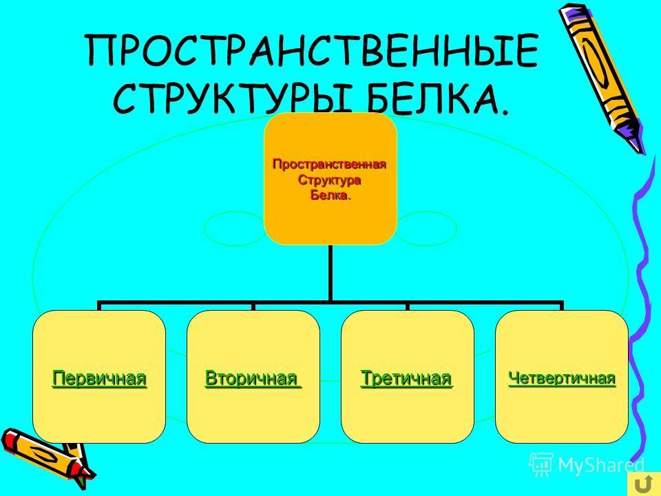 Принцип объединения аминокислот в полипептидную цепочку. Аминокислоты в белковой молекуле соединены следующим образом. Между остатком кислотной группы одной аминокислоты и остатком аминогруппы другой аминокислоты образуется ковалентная связь, которая