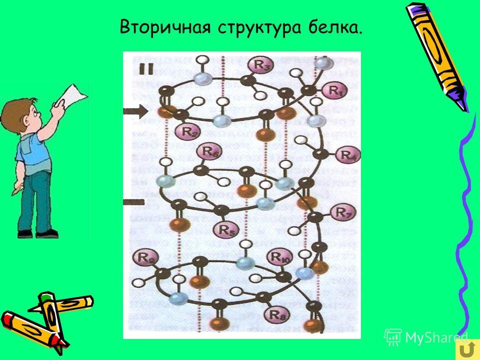 Вторичная структура белка представляет собой белковую макромолекулу свёрнутую в спираль. Ковалентные полярные связи между аминокислотными звеньями + множество слабых водородных связей между витками спирали.