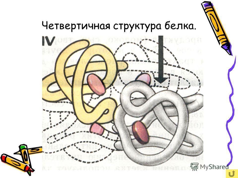 Четвертичная структура белка. Сложный агрегат из многих полипептидных цепей. Присутствует весь комплекс перечисленных типов химических связей.
