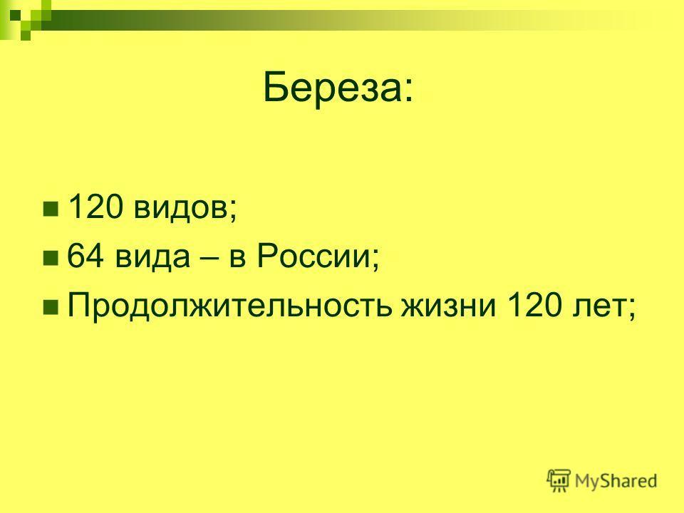 Береза: 120 видов; 64 вида – в России; Продолжительность жизни 120 лет;