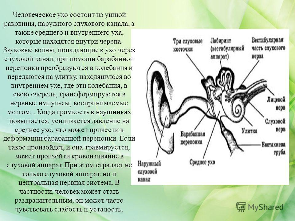 Человеческое ухо состоит из ушной раковины, наружного слухового канала, а также среднего и внутреннего уха, которые находятся внутри черепа. Звуковые волны, попадающие в ухо через слуховой канал, при помощи барабанной перепонки преобразуются в колеба