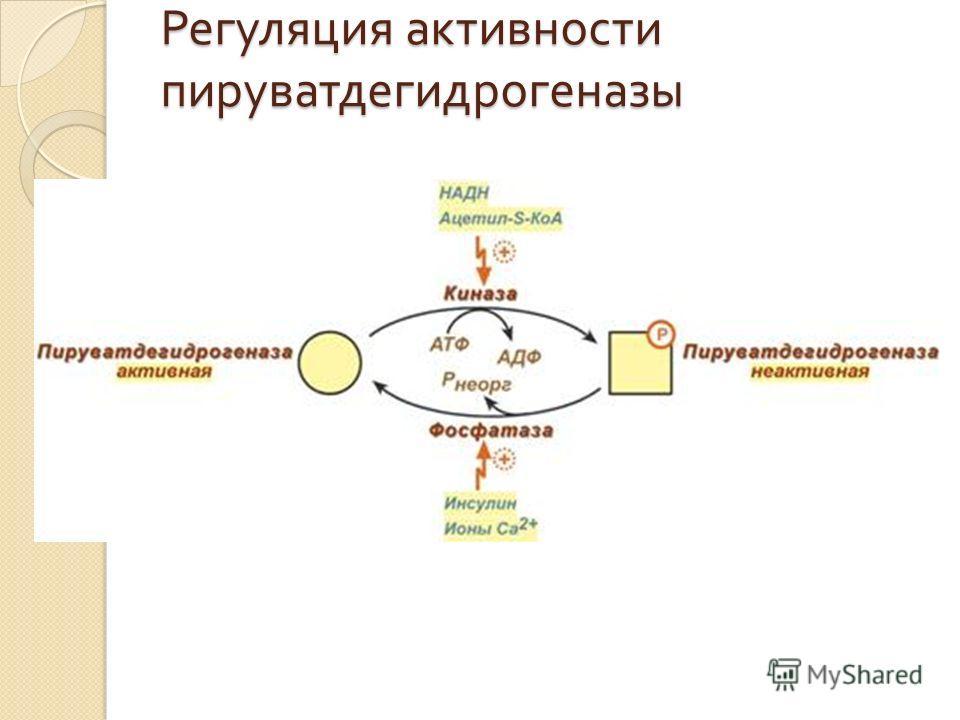 Регуляция активности пируватдегидрогеназы