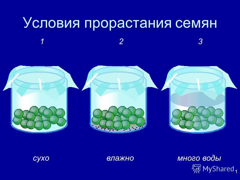 1 Условия прорастания семян суховлажно много воды 12 3