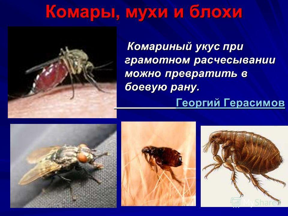 Комары, мухи и блохи Комариный укус при грамотном расчесывании можно превратить в боевую рану. Комариный укус при грамотном расчесывании можно превратить в боевую рану. Георгий Герасимов Георгий ГерасимовГеоргий ГерасимовГеоргий Герасимов