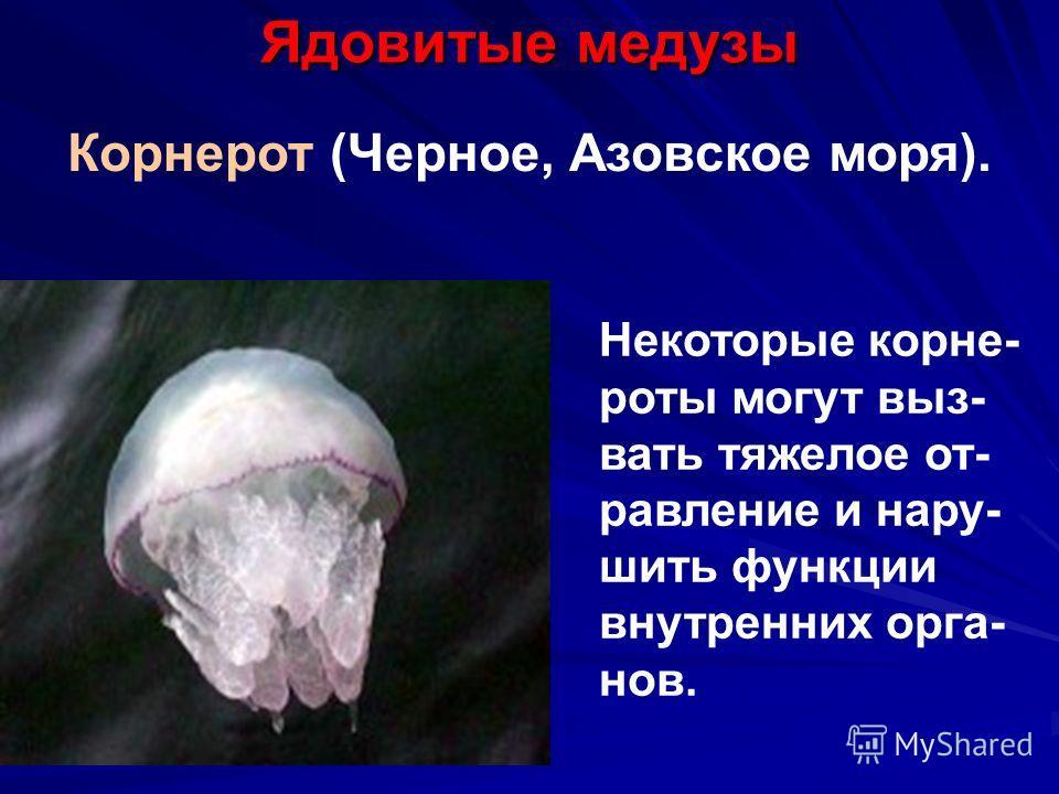 Ядовитые медузы Корнерот (Черное, Азовское моря). Некоторые корне- роты могут выз- вать тяжелое от- равление и нару- шить функции внутренних орга- нов.