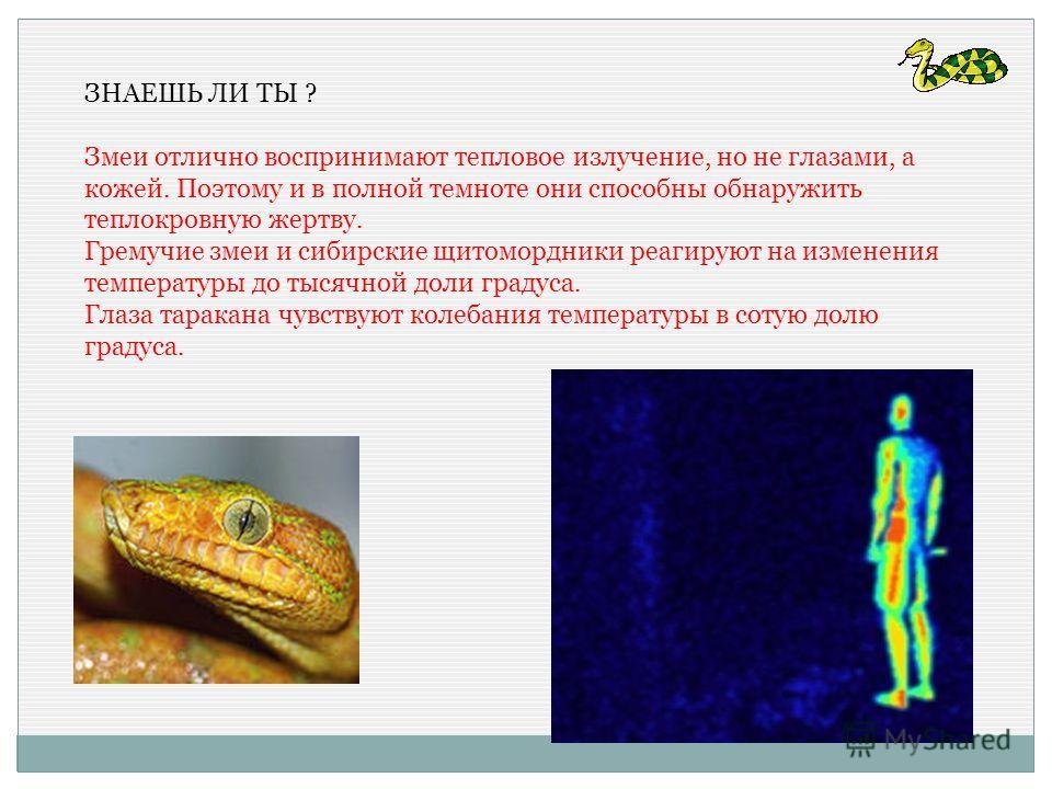 ЗНАЕШЬ ЛИ ТЫ ? Змеи отлично воспринимают тепловое излучение, но не глазами, а кожей. Поэтому и в полной темноте они способны обнаружить теплокровную жертву. Гремучие змеи и сибирские щитомордники реагируют на изменения температуры до тысячной доли гр