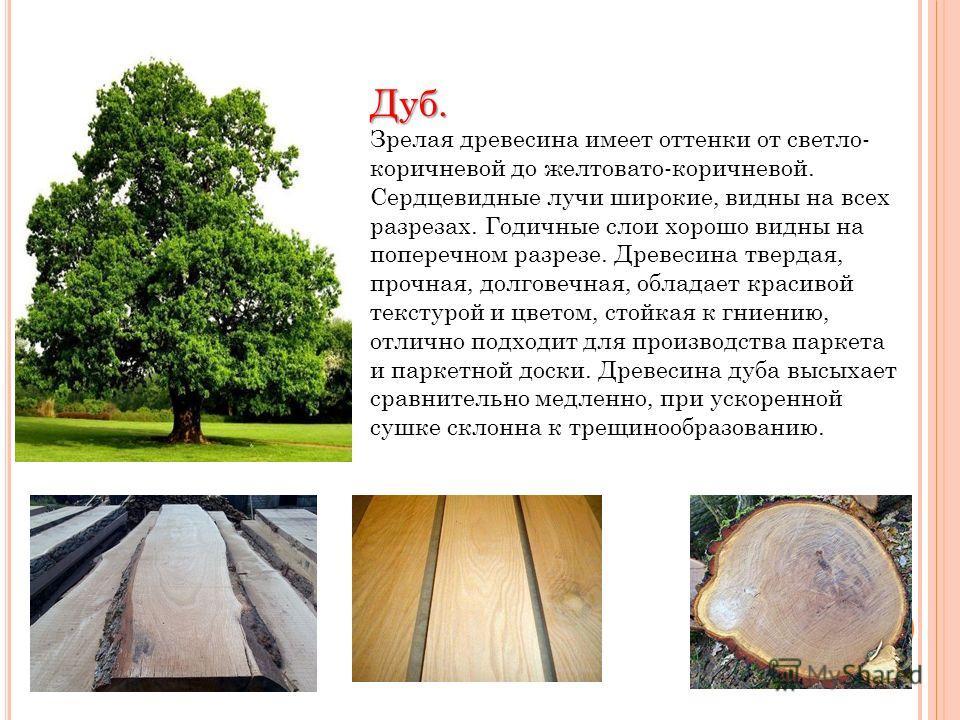 Дуб. Зрелая древесина имеет оттенки от светло- коричневой до желтовато-коричневой. Сердцевидные лучи широкие, видны на всех разрезах. Годичные слои хорошо видны на поперечном разрезе. Древесина твердая, прочная, долговечная, обладает красивой текстур