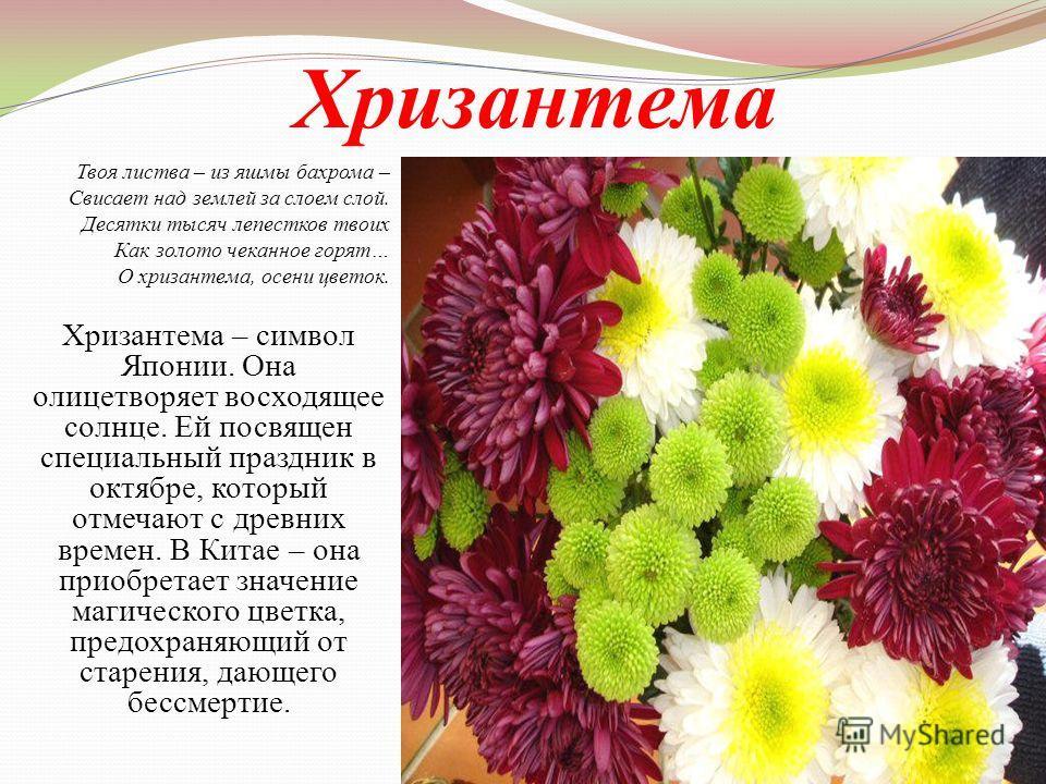 Хризантема Твоя листва – из яшмы бахрома – Свисает над землей за слоем слой. Десятки тысяч лепестков твоих Как золото чеканное горят… О хризантема, осени цветок. Хризантема – символ Японии. Она олицетворяет восходящее солнце. Ей посвящен специальный