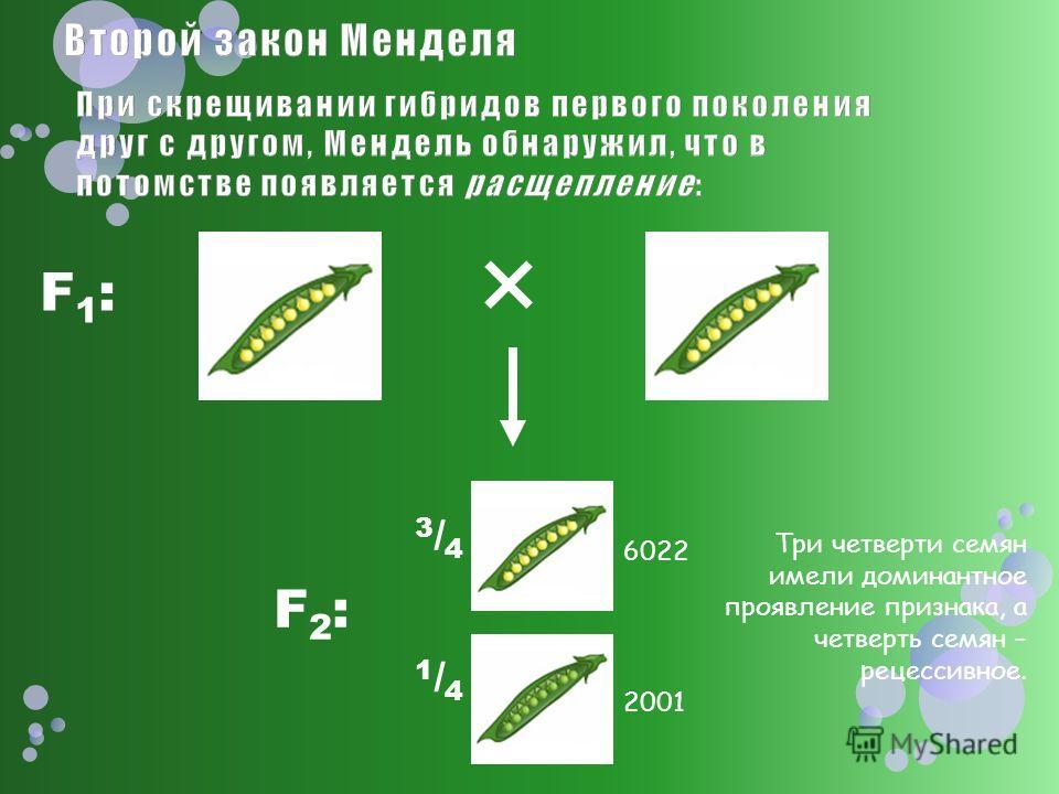 F1:F1: F2:F2: 3/43/4 1/41/4 Три четверти семян имели доминантное проявление признака, а четверть семян – рецессивное. 6022 2001