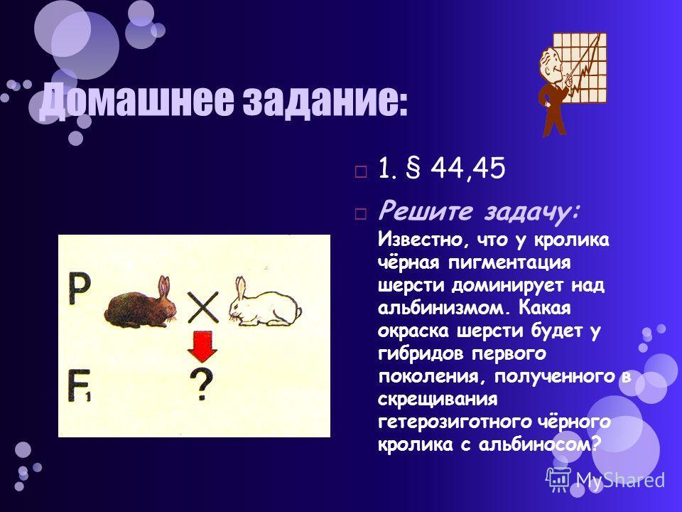 Домашнее задание: 1. § 44,45 Решите задачу: Известно, что у кролика чёрная пигментация шерсти доминирует над альбинизмом. Какая окраска шерсти будет у гибридов первого поколения, полученного в скрещивания гетерозиготного чёрного кролика с альбиносом?