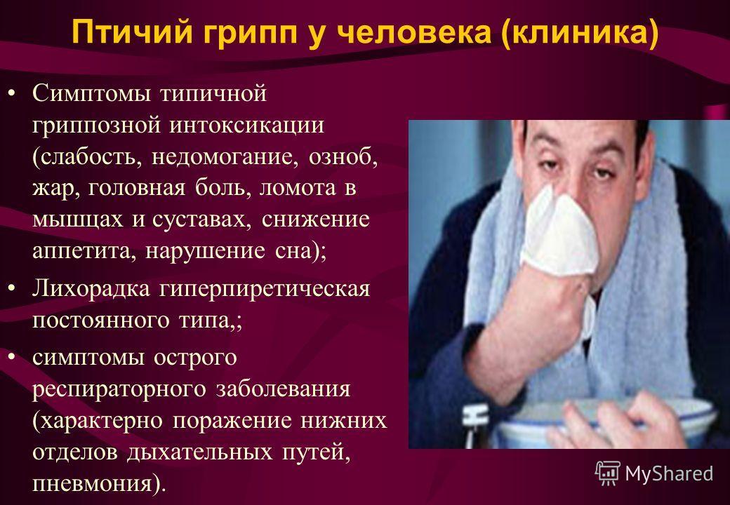 Птичий грипп у человека (клиника) Симптомы типичной гриппозной интоксикации (слабость, недомогание, озноб, жар, головная боль, ломота в мышцах и суставах, снижение аппетита, нарушение сна); Лихорадка гиперпиретическая постоянного типа,; симптомы остр