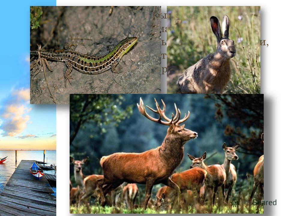 Животный мир Крыма поистине удивителен и весьма схож с фауной близлежащих южных областей России, но мы можем встретить в Крыму и животных, характерных для Средиземноморья.