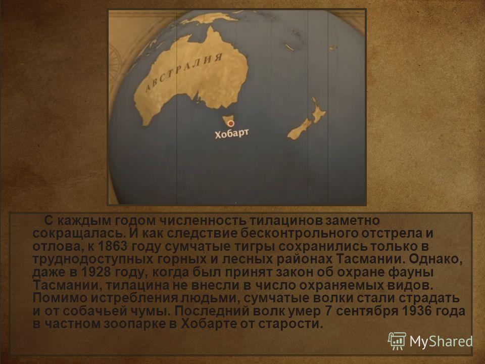 С каждым годом численность тилацинов заметно сокращалась. И как следствие бесконтрольного отстрела и отлова, к 1863 году сумчатые тигры сохранились только в труднодоступных горных и лесных районах Тасмании. Однако, даже в 1928 году, когда был принят