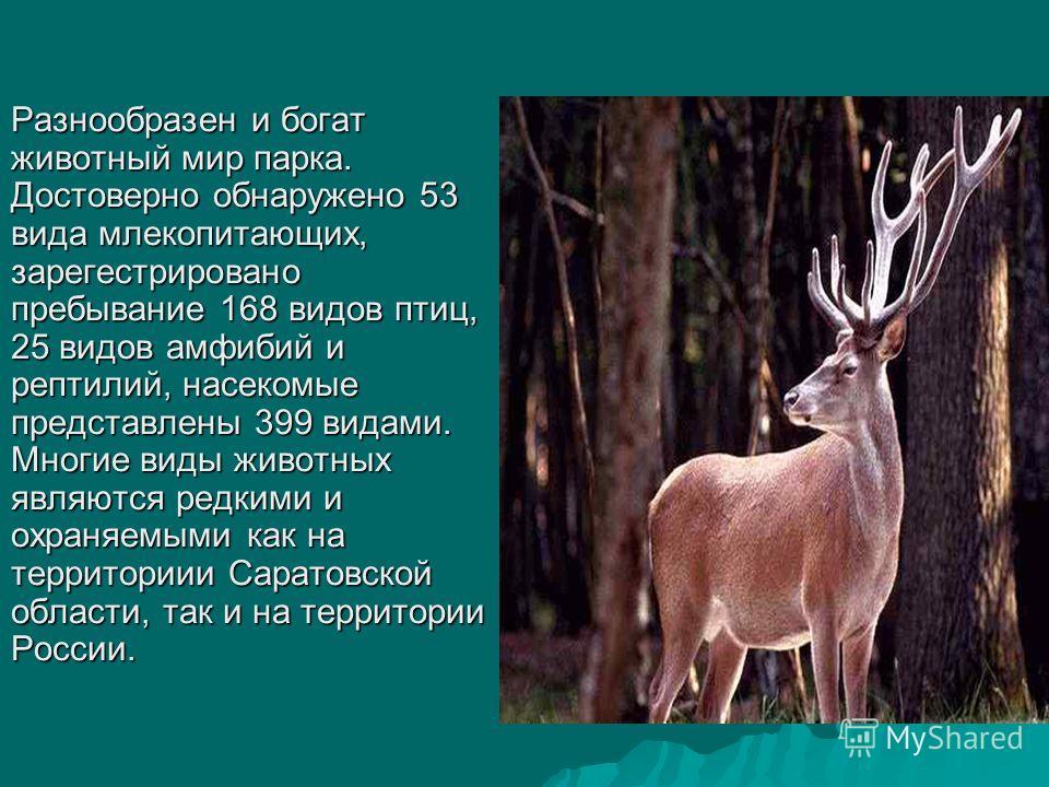 Разнообразен и богат животный мир парка. Достоверно обнаружено 53 вида млекопитающих, зарегестрировано пребывание 168 видов птиц, 25 видов амфибий и рептилий, насекомые представлены 399 видами. Многие виды животных являются редкими и охраняемыми как