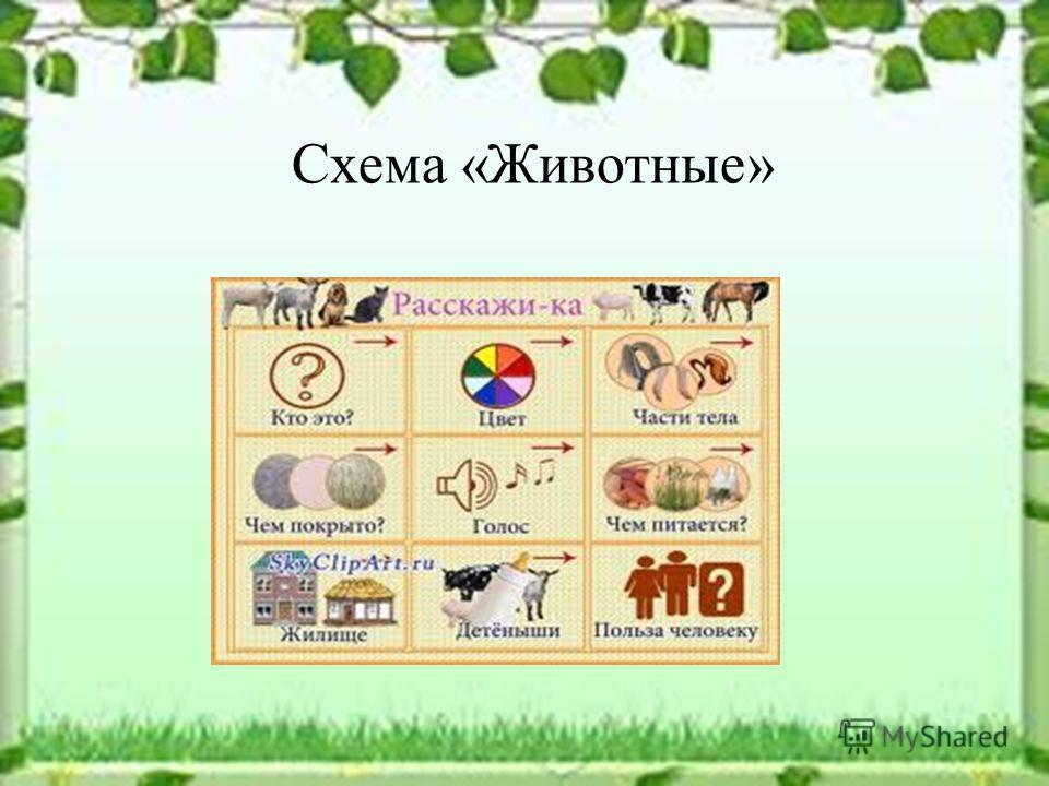 Схема «Животные»
