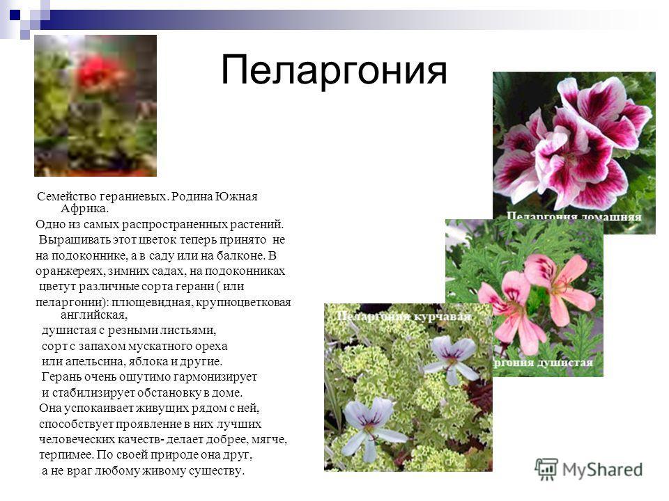 Условия содержания комнатных растений. Свет Светолюбивые и тенелюбивые растения. Размещать лучше на подоконниках, ориентированных на запад и восток, а в помещении - в настенных кашпо и на подставках. Тепло Холодостойкие, умеренно теплолюбивые, теплол