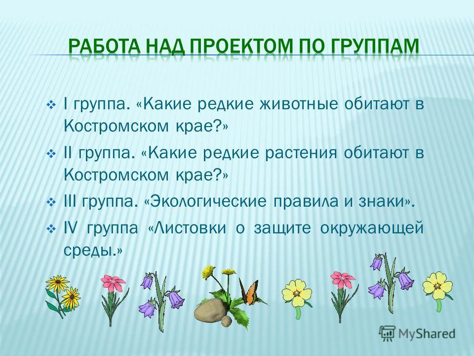 I группа. «Какие редкие животные обитают в Костромском крае?» II группа. «Какие редкие растения обитают в Костромском крае?» III группа. «Экологические правила и знаки». IV группа «Листовки о защите окружающей среды.»
