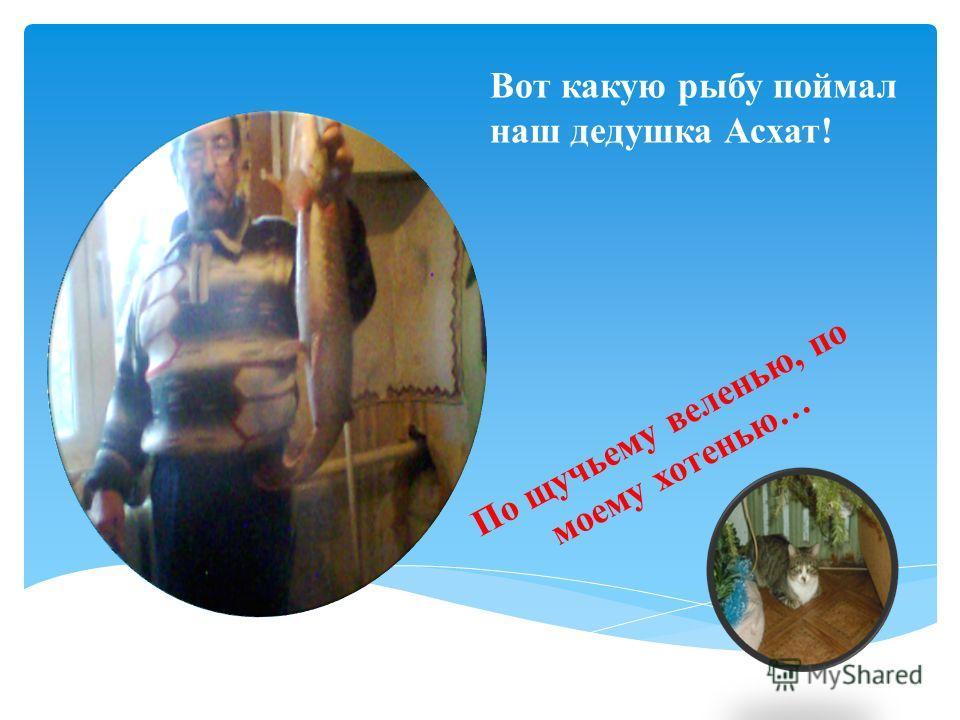 Вот какую рыбу поймал наш дедушка Асхат! По щучьему веленью, по моему хотенью…