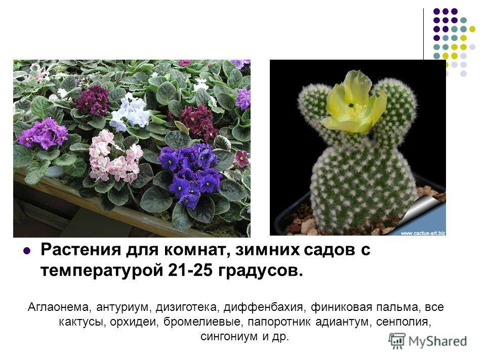 Растения для комнат, зимних садов с температурой 21-25 градусов. Аглаонема, антуриум, дизиготека, диффенбахия, финиковая пальма, все кактусы, орхидеи, бромелиевые, папоротник адиантум, сенполия, сингониум и др.