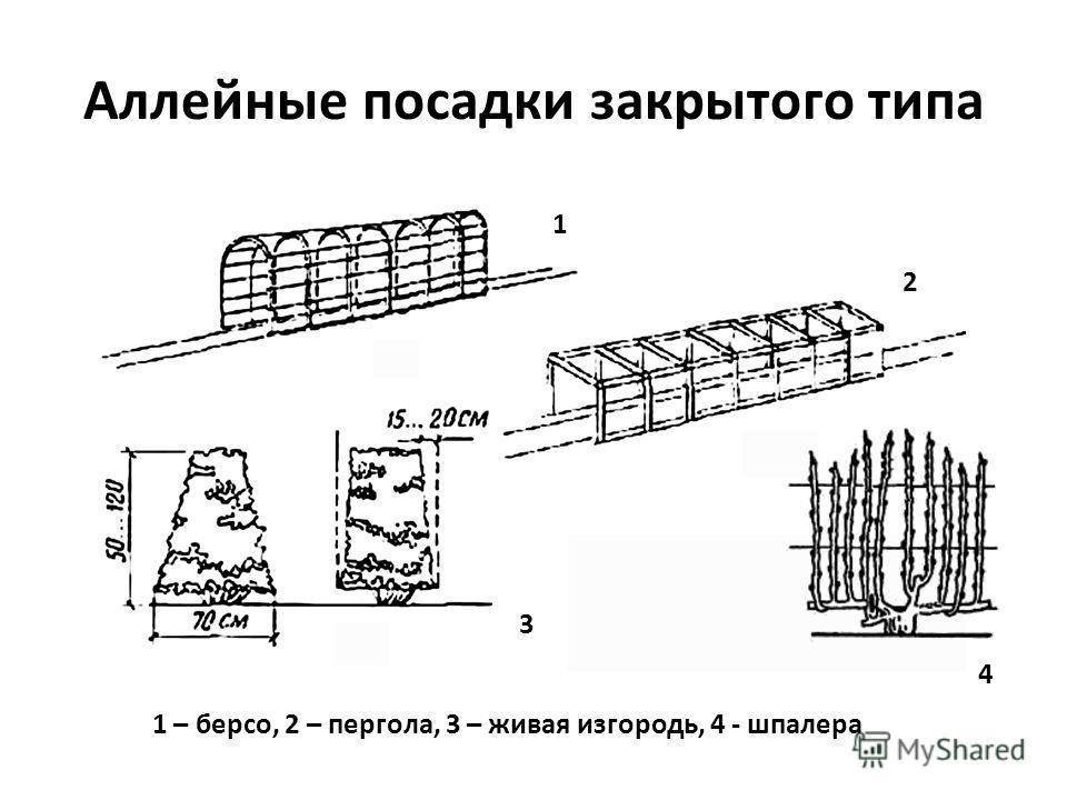 Аллейные посадки закрытого типа 1 – берсо, 2 – пергола, 3 – живая изгородь, 4 - шпалера 1 2 3 4