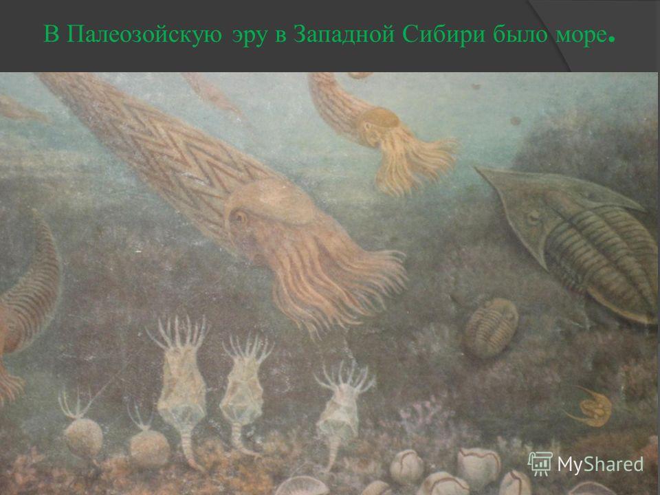 В Палеозойскую эру в Западной Сибири было море.